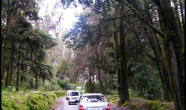 Road leading upto Dodabetta
