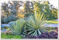 Succulents and More: Huntington Desert Garden: agaves ...