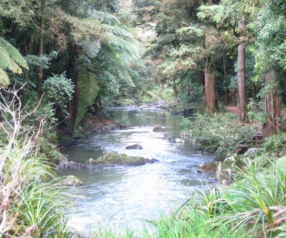 Hatea River, Whangarei Falls