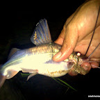 Herman catches this catfish at night by hand!