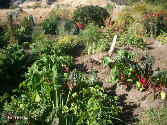 The vegetable garden of an organic farm in New Zealand