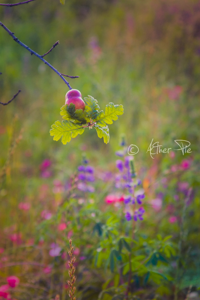 Meadow_byAEtherPie