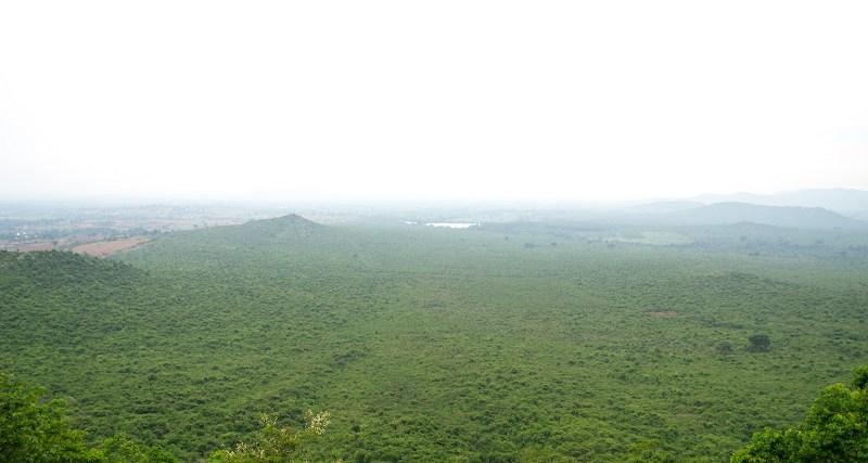 forests below gs betta