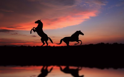 Horse sunset 6K 5760x3600 HD Wallpaper - HDwallpaperspack.in