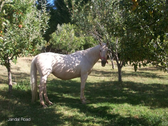 Horse on a New Zealand farm