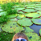 Mini Lily and Giant Lilypads