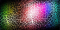 Colorful Leopard Print Background Wallpaper | Best Free HD ...