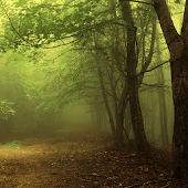 Forest Wallpaper - Android Apps on Google Play