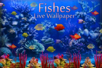Fishes Live Wallpaper 2017 - Android Apps on Google Play