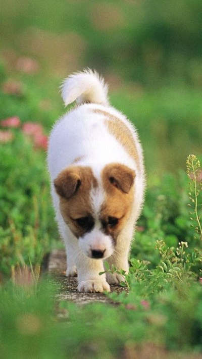 Puppy Live Wallpaper 🐕 Pictures of Cute Puppies - Android Apps on Google Play