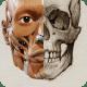 Anatomía 3D para el artista Lt pc windows