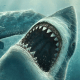 Tiburón De Movimiento LWP pc windows