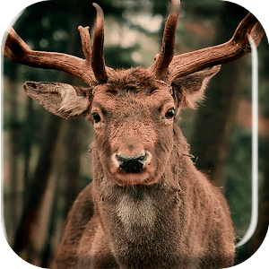 Herd of Deer Live Wallpaper - Android Apps on Google Play