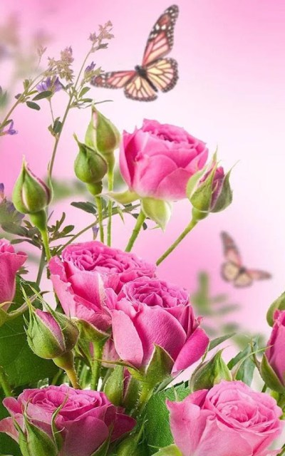 HD Rose Flowers Live Wallpaper - Android Apps on Google Play