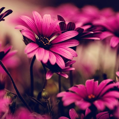 Flower Live Wallpapers - Android Apps on Google Play