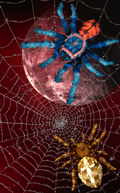 Spider, live wallpaper - Android Apps on Google Play