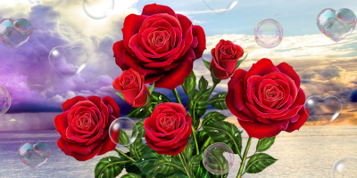 Rose, live wallpaper - Android Apps on Google Play