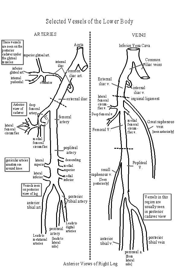 diagram samsung core 2