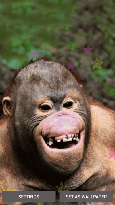 Funny Monkey Live Wallpaper - Android Apps on Google Play