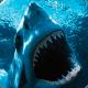 Shark Wallpapers pc windows