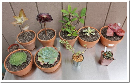 Succulents And More: Succulent Gardens Extravaganza, Part 2