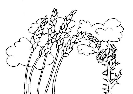 dibujos de espigas de trigo para colorear