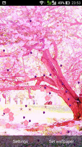 Sakura Falling Live Wallpaper Apk Sakura Pro Live Wallpaper For Android