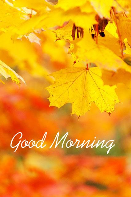 The Yellow Wallpaper Quotes About John Good Morning Images Android Apps On Google Play