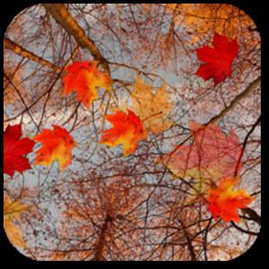 Water Falling Leaves Live Wallpaper Apk App Autumn Maple Live Wallpaper ★ Apk For Kindle Fire
