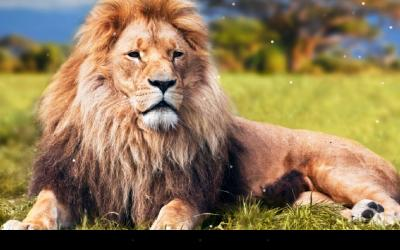 Lion Live Wallpaper - Android Apps on Google Play