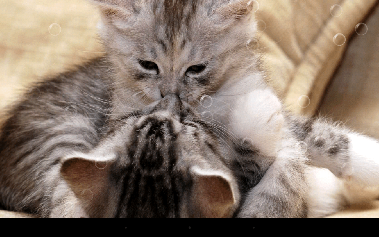 Lustige Katzen Funny Cat Live Wallpaper Android Apps On Google Play