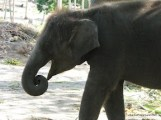 Baby Elephant-5.JPG