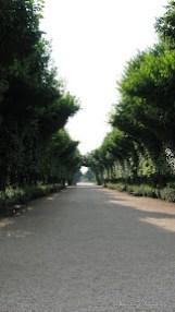 Schonbrunn Palace Gardens-1.JPG