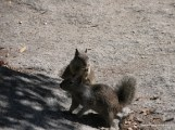Squirrel Watching - Yosemite National Park.JPG