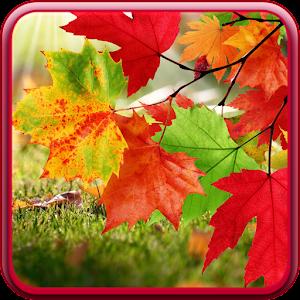 Water Falling Leaves Live Wallpaper Apk Autumn Live Wallpaper Apk For Blackberry Download