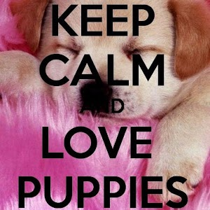 Cute Wallpapers For Phone Caces Keep Calm 4 Puppies Android Apps On Google Play
