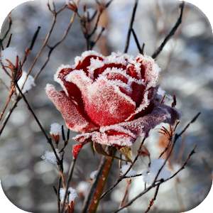 3d Weather Live Wallpaper Winter Flowers Live Wallpaper Android Apps On Google Play