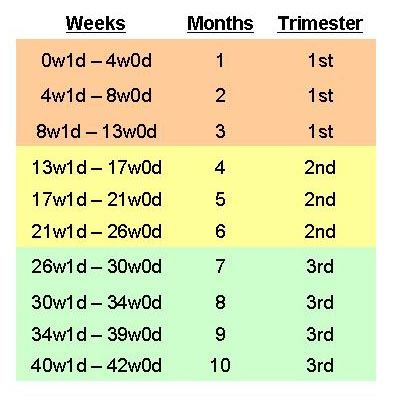 weeks and months chart - Heartimpulsar