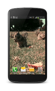 Cm Launcher 3d Wallpaper Apk Download App Little Squirrel 3d Wallpaper Apk For Kindle Fire