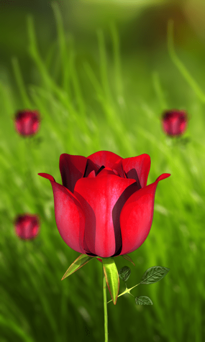 360 Flower live wallpaper 3D - Android Apps on Google Play