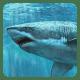 Tiburones 3D Fondo Animado pc windows