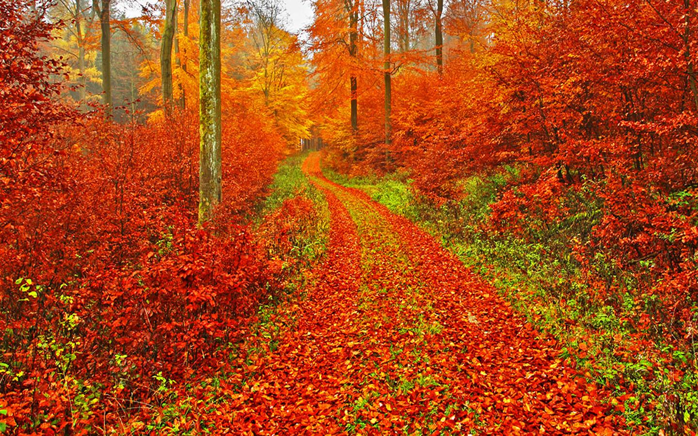 Fall Themed Wallpaper Desktop Autumn Wallpaper Android Apps On Google Play