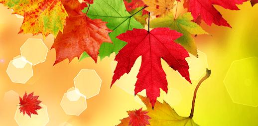 Falling Leaves Live Wallpaper Apk Autumn Live Wallpaper Apk Apkname Com