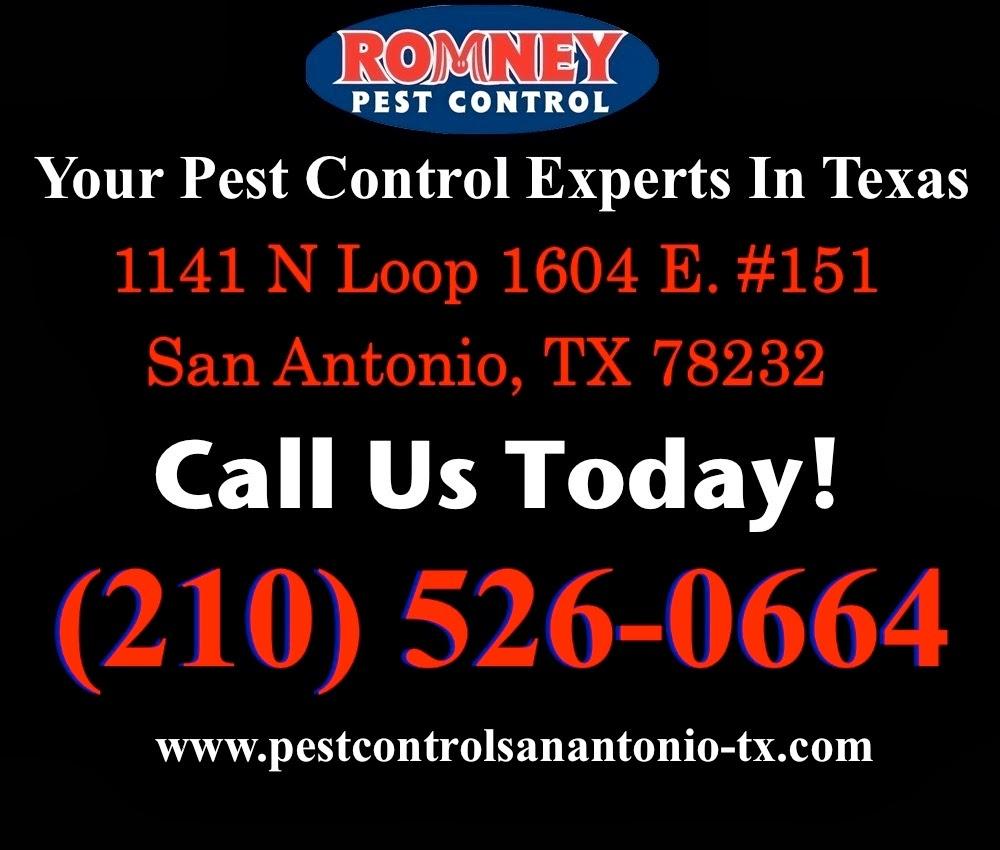 Fullsize Of Romney Pest Control