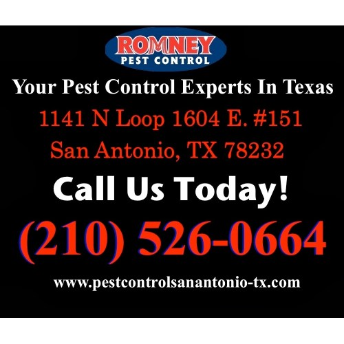 Medium Crop Of Romney Pest Control