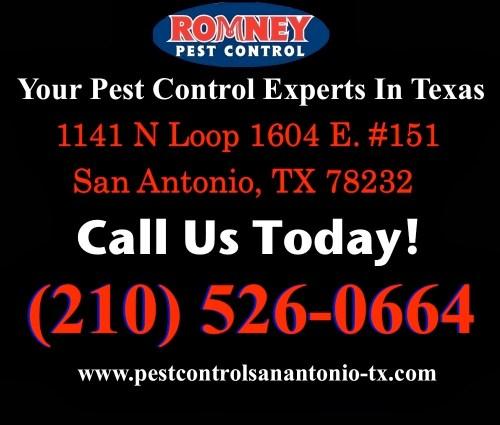 Medium Of Romney Pest Control