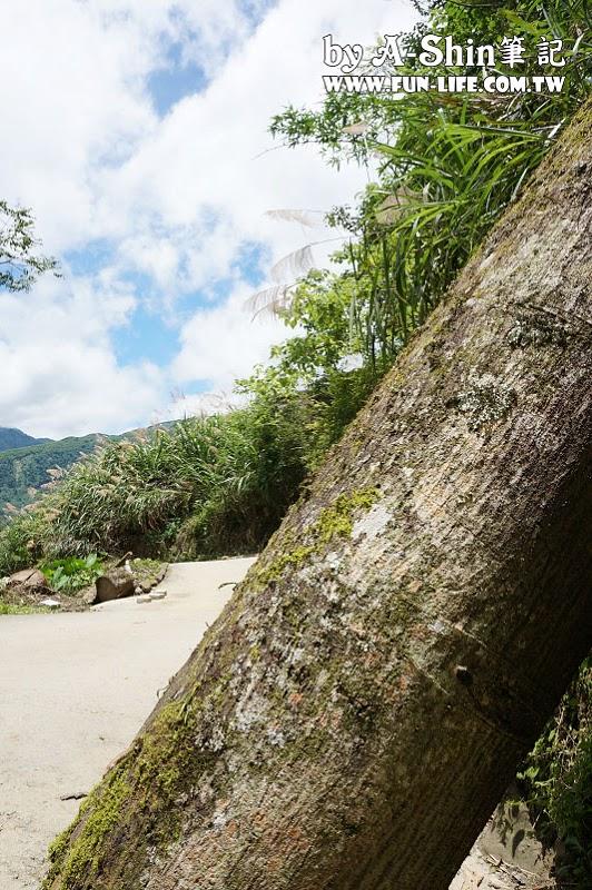 南投竹山遊-竹山天梯-太極峽谷-青龍瀑布6