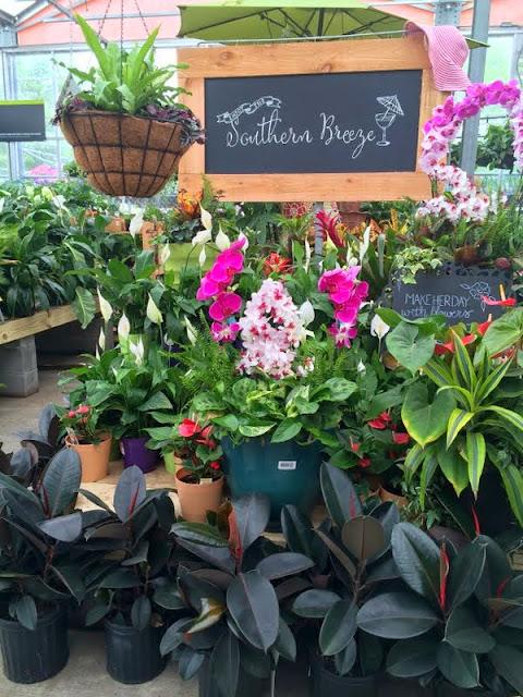 colorful garden display