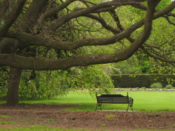 Hagley Park in central Christchurch