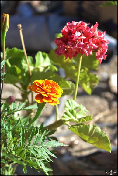 kargil guest house flower